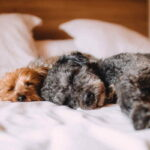 Spánková kalkulačka: V kolik hodin jít spát, abyste ráno byli fit?